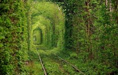 Tunnel dell'amore, Klevan, Ucraina . Questo tunnel si formò negli anni, grazie ai treni che facevano tre volte al giorno lo stesso tragitto, plasmando gli alberi circostanti. Ormai abbandonate, le rotaie sono oggi un luogo romantico per una passeggiata d'amore