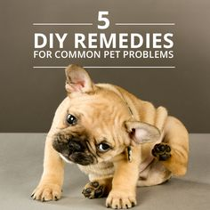 DIY home remedies for your dog's bad breath, itchy skin and more. #pets #dogs #diy