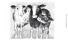 Veal calves by Sam Goodlet - www.samdrawsthings.com