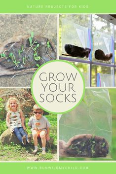 Your Socks Grow your socks - nature science experiment for kids. Have your kids take a hike in an old pair of socks and watch them grow!Grow your socks - nature science experiment for kids. Have your kids take a hike in an old pair of socks and watch them Earth Day Activities, Outdoor Activities For Kids, Nature Activities, Science Activities, Science Projects, Science Ideas, Preschool Science, Classroom Activities, Classroom Ideas