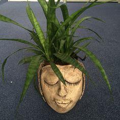 S kvetinou Plants, Planters, Plant, Planting