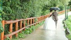 Wedding couple walking away under an umbrella - HD stock video clip Wedding Couples, Wedding Photos, Couples Walking, Two Brides, Video Clip, Garden Bridge, Stock Video, Stock Footage, Shelter