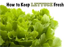 keep lettuce fresh