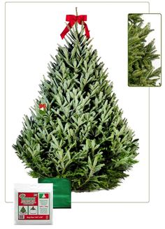 5 Foot Premium Fresh Cut Live Christmas Tree Delivery To Your Home The