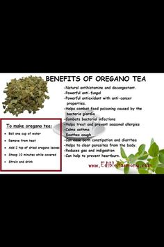 Herbal Medicine Oregano Tea: this helped me fight a cold in 2 days. I still drank it at least twice a day until I was again. Also drink it w/ my Claritin D when allergies get bad. Natural Medicine, Herbal Medicine, Holistic Medicine, Oregano Tea Benefits, Curcuma Benefits, Herbal Remedies, Health Remedies, Stomach Remedies, Holistic Remedies