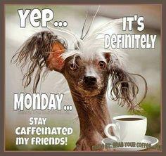 Yep...It's Monday....Stay caffeinated my friends!                                                                                                                                                                                 More
