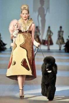 Poodle fashion show - LOVE LOVE LOVE this poodle's collar. Poodle makes the fashion show! Rottweiler, French Poodles, Standard Poodles, Tea Cup Poodle, Pink Poodle, Poodle Cuts, Poodle Grooming, Dog Grooming, Bulldog Breeds