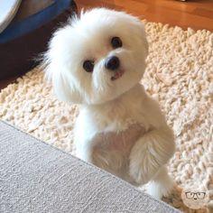 Super Cute Puppies, Cute Baby Dogs, Cute Little Puppies, Super Cute Animals, Cute Dogs And Puppies, Cute Little Animals, Baby Puppies, Cute Funny Animals, Doggies