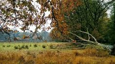 Tsjonge wat is die NS Kampina wandeling mooi. (Foto met Nexus 5.) #photography #travelphotography #traveller #canon #canonnederland #canon_photos #fotocursus #fotoreis #travelblog #reizen #reisjournalist #travelwriter#fotoworkshop #willemlaros.nl #reisfotografie #landschapsfotografie