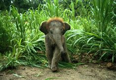 Adorable baby elephant--asian elephant