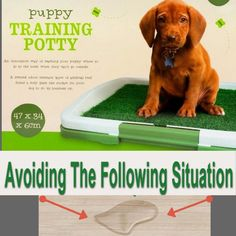 Grass Mat Puppy Indoor Pet Toilet Dog Dog Synthetic Potty Training Pad Cm for sale online Training Pads, Potty Training, Toilet Training, Mat Online, Dog Toilet, Indoor Pets, Pet Dogs, Grass