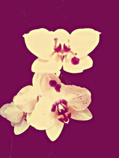 Orquídeas.