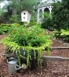 Wheelbarrow planted with Lantana and Creeping Jenny (Garden of Len & Barb Rosen)