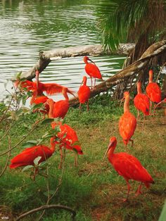 exotic birds from brazil - Google Search