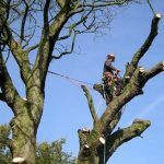 How To Hire A Tree Surgeon And Save Life? -While cutting trees, falling from ladders is a palpable risk and this is the commonest type of garden accident. While gardening, a cut from an equipment can be life threatening. Trimming Hedges, Tree Specialist, Stump Removal, Tree Surgeons, Tree Felling, Tree Pruning, Garden Features, One Tree, Environmental Issues