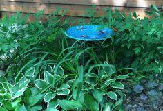 Satellite Dish to Bird Bath