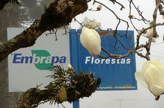 Embrapa Florestas em Colombo, PR