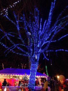 electric blue Christmas tree !