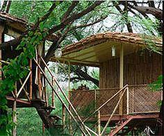 The Tree House - Jaipur -  Rajasthan