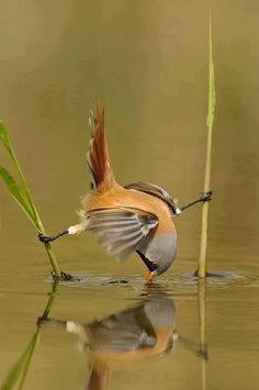 Thirsty… | Amazing Pictures