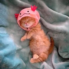 Cute Baby Cats, Cute Little Animals, Cute Funny Animals, Kittens Cutest, Cute Babies, Cute Cats And Kittens, Baby Animals Pictures, Cute Animal Pictures, Photo Chat
