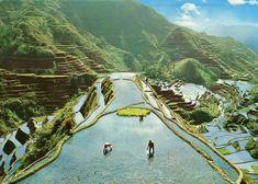 1982, Banuae Philippines Terraces