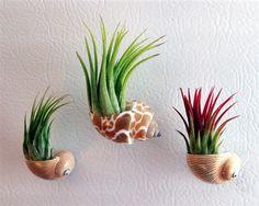 Display Ideas -- Seashell Planters, use magnets to mount on fridge