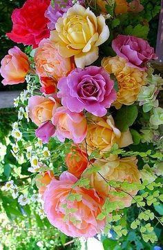 Exquisite roses.