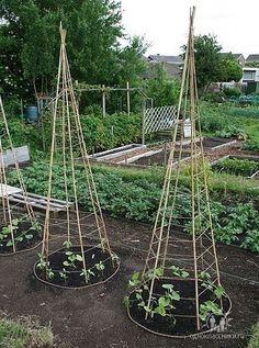 6 Bamboo or Branch Tomato Cages Projects & Videos. Now that's a pretty veggie garden. Veg Garden, Garden Trellis, Edible Garden, Bean Trellis, Vegetable Gardening, Tomato Trellis, Bamboo Trellis, Pole Beans Trellis, Diy Trellis