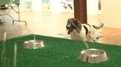 la première exposition d art pour chien: Jets d'eau et gamelles. Fallait y penser!