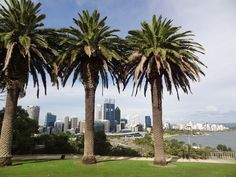AUSTRALIE - Territoire de l'Ouest - ville de PERTH Western Australia, Perth, Seattle Skyline, Travel, Australia, City, Voyage, Viajes, Traveling