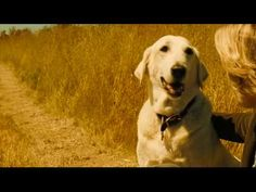 """Good movie to watch; Marley & Me. Bit sad at the end, but great advice for living from John Grogan, """"A dog has no use for fancy cars, big homes, or designer clothes. A water log stick will do just fine. A dog doesn't care if your rich or poor, clever or dull, smart or dumb. Give him your heart and he'll give you his. How many people can you say that about? How many people can make you feel rare and pure and special? How many people can make you feel extraordinary?""""…"""