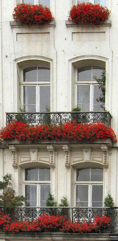 Window boxes | Flickr - Photo Sharing!