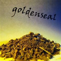 The Goldenseal root extract benefits extend in the treatment of cold and flu, these commonly occurring infections are easily treated with herbal medicines made from Goldenseal.  One of the common Goldenseal health benefits include the strengthening of the immune system. Native Americans believed that this herb is responsible boosting the immune system.