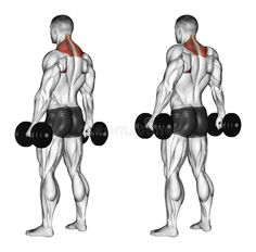 Photo about Shrugs with dumbbells. Exercising for bodybuilding Target muscles are marked in red. Initial and final steps. Illustration of trapezius, muscle, upper - 43722897
