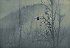 Wildlife Nature Photography  Washington by MScottPhotography