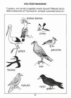 Nature Study, Bird Drawings, Toddler Preschool, Types Of Art, Animals For Kids, Art For Kids, Coloring Pages, Activities For Kids, Birds