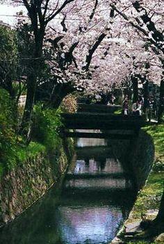 Philosopher's Walk | JapanVisitor Japan Travel Guide