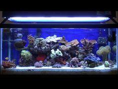 Nano Reefs VS Larger Reef Tanks - YouTube