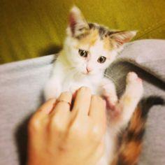 Küçücük / baby cat