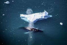 Whale Watching in Greenland – close to the marine mammals in their element