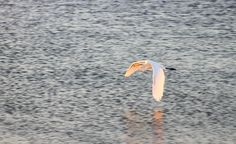 October 18, 2012  Indian Harbour Beach, Florida  Eau Gallie Causeway