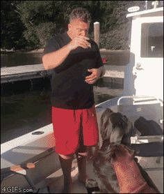 Huge dog accidentally pushes guy off boat. [video]