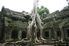 Ta Prohm Siem Reap, Cambodge