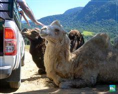 Um passeio com a família pelo Safári é incrível, não é mesmo ?! #lugardeserfeliz  Reserve → http://portobelloresort.com.br/promo/promocao-especial-abril/