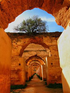 Africa | Sights & Sounds.  The horse stables in Meknes Morocco, Africa | repinned by BroCoLoco.com