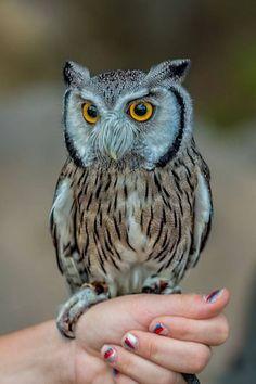 Owl Lovers - Hlavní stránka