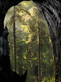 Mystical Forest,  Leland D.Howard
