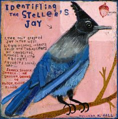 Melinda K. Hall:Identifying the Steller's Jay