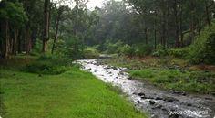 Keahua Forestry Arboretum